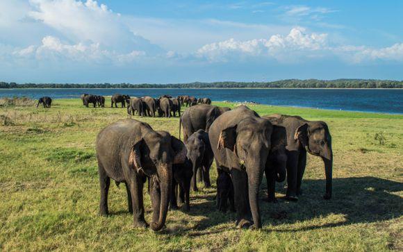 Sri Lankan Tour & Beach Stay