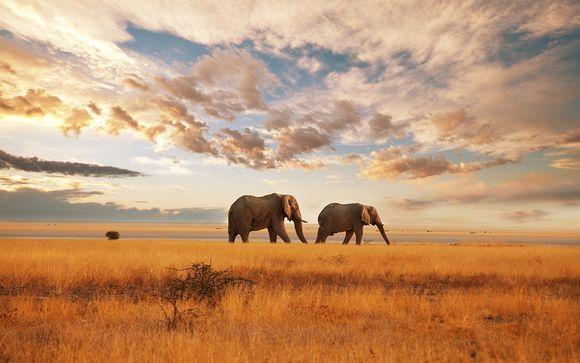 Aerial Safari in Kenya