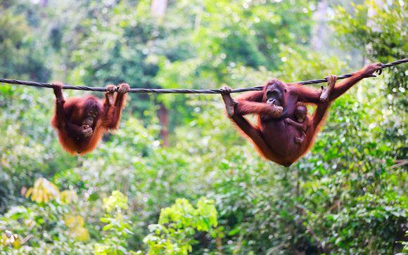 Malaysia Wildlife, City & Beach Holiday