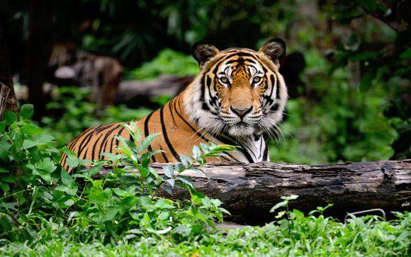Jungle Book Safari Private Tour