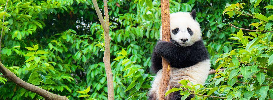 Zoo de Beauval : Votre Hôtel et séjour jusqu'à -70%