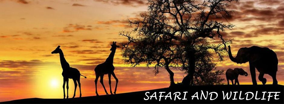 Safari and wildlife holidays